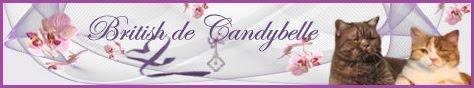 Chatterie de Candybelle