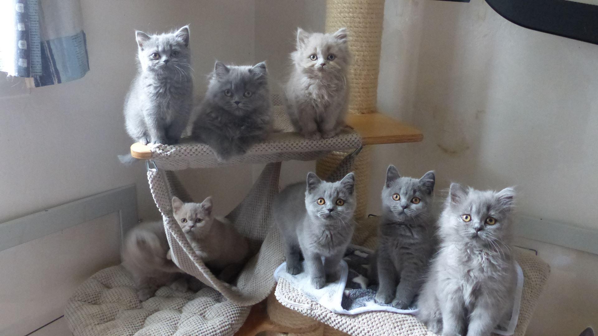 tous les chatons